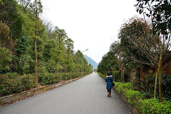 公路风景绿化带