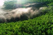 大兴安岭密林晨雾