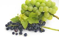 白色背景葡萄