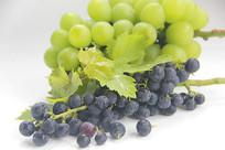 绿叶大小葡萄