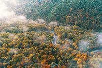 长白山秋季森林小河晨雾