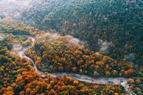 航拍长白山小河彩林晨雾