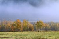 金秋树林彩林云雾