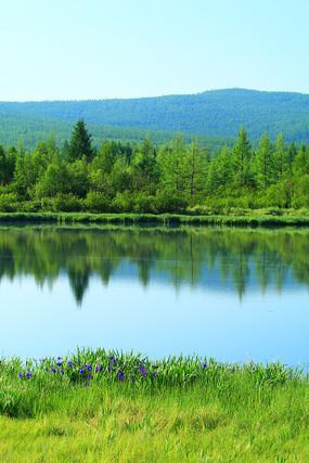 森林湖泊植物丰茂