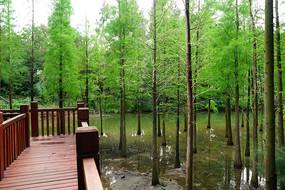 湿地公园树林