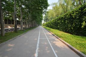 老市区的绿化林荫道