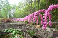 彭州丹景山花卉廊架拱门长廊