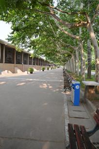 梧桐树的街道