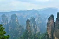 张家界地质公园群峰景观