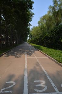 城市绿化林荫道