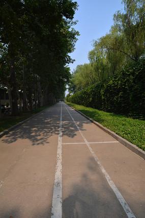 城市绿化透视