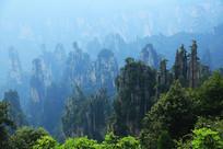 张家界国家森林公园群峰景观