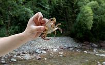 抓螃蟹趣味活动