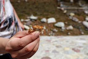 走进大自然抓螃蟹