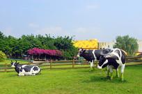 城市公园奶牛雕塑