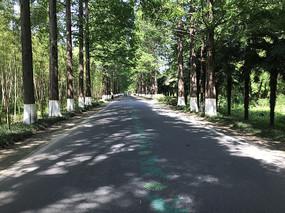 东台森林公园林荫大道