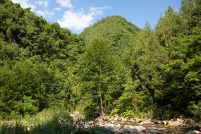 阳光照耀的巫山龙潭溪森林风光