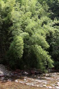 重庆巫山骡坪龙潭溪竹影溪流