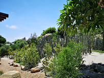 热带多肉植物