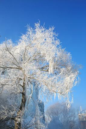 蓝天雾凇树花