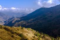 神农架森林风光