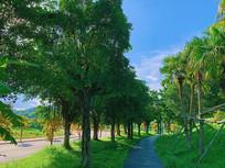 城市道路边的绿化景观