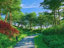 城市园林绿化风景线