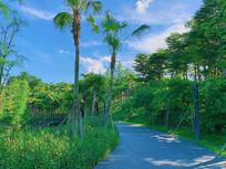 蓝天白云绿树踏青图