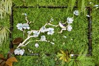 立体植物装饰墙