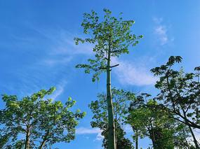 阳光下的绿色树林