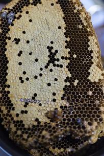 新鲜可口的蜜蜂蜂巢