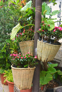竹筐盆栽花卉
