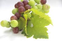 绿叶鲜果紫葡萄