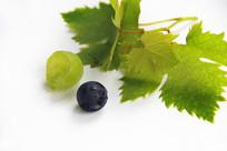 绿叶鲜美葡萄