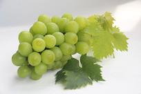 葡萄两片绿叶