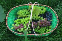 青草地一篮子葡萄