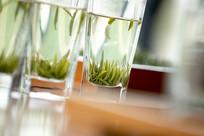 玻璃杯中的绿茶