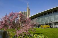 德国汉诺威国际展览中心樱花