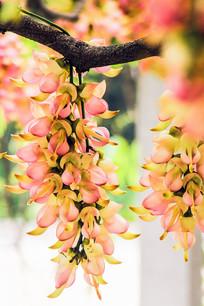 粉红色雀儿花