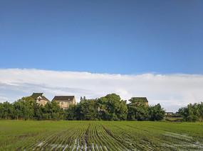 稻田水乡景色