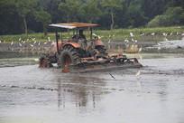 牛背鹭拖拉机