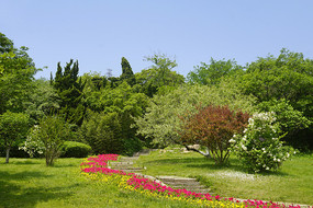 青岛植物园鲜花小路