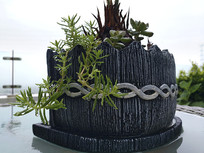 特写盆栽植物