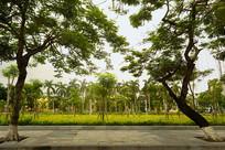 越南海防市城市公园绿化