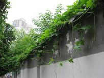 墙上的绿色植物