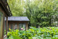房前荷塘树下花