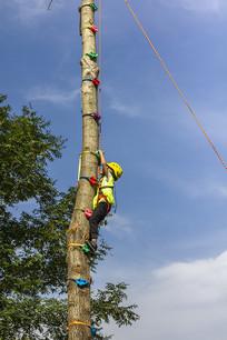 户外运动儿童向上攀爬树干