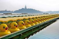 北海黄鸭游船