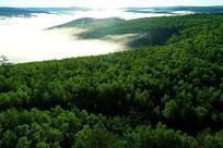 大兴安岭绿色林海云雾
