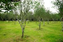 公园园林树木